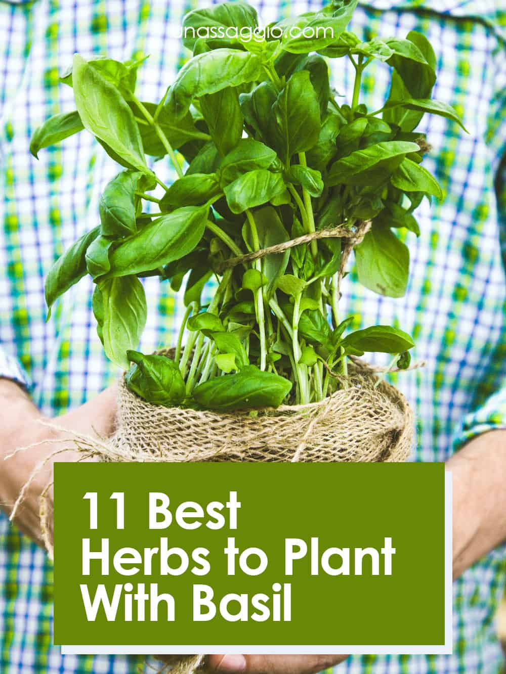 11 Best Herbs to Plant With Basil