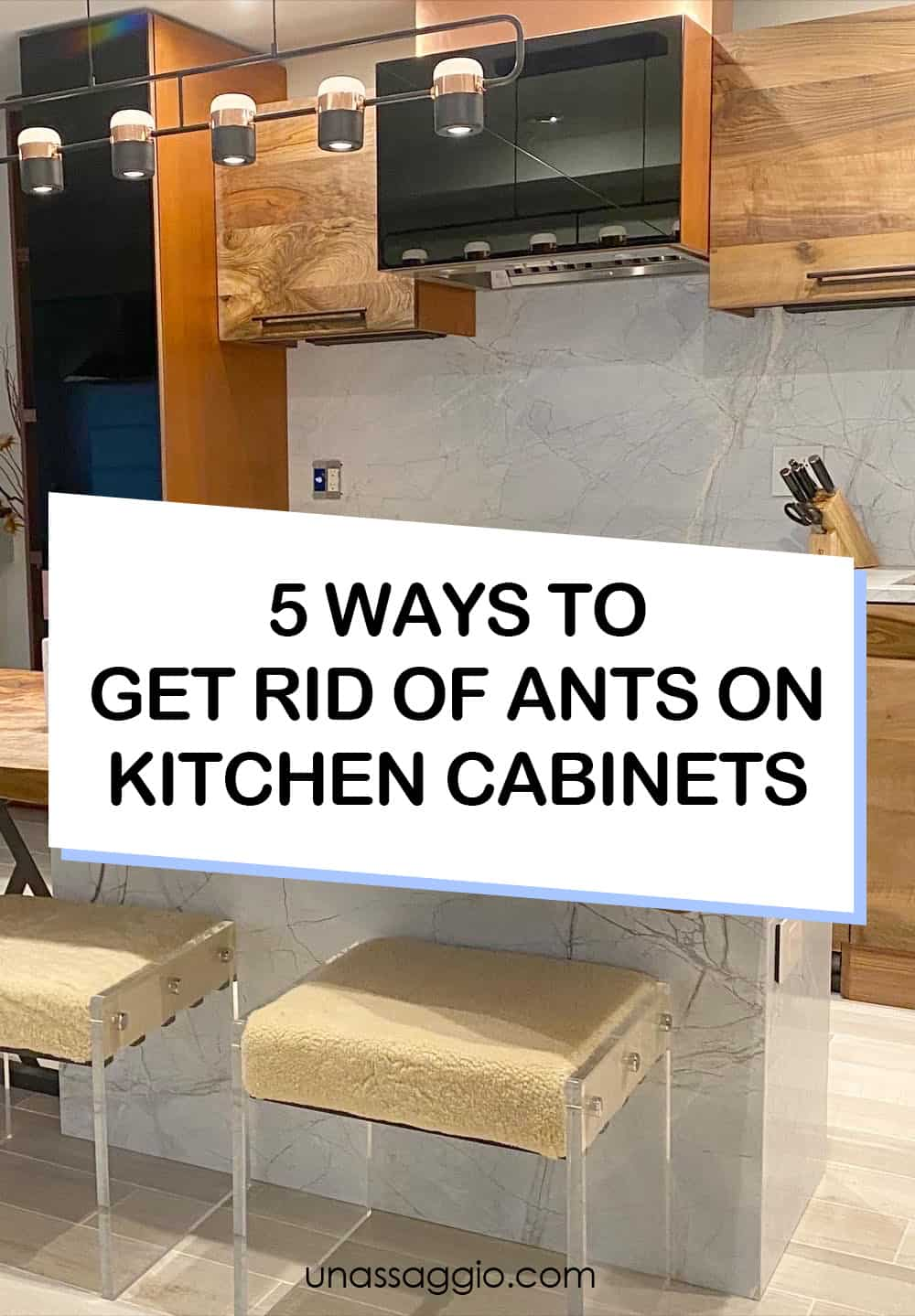 5 Ways to Get Rid Of Ants On Kitchen Cabinets