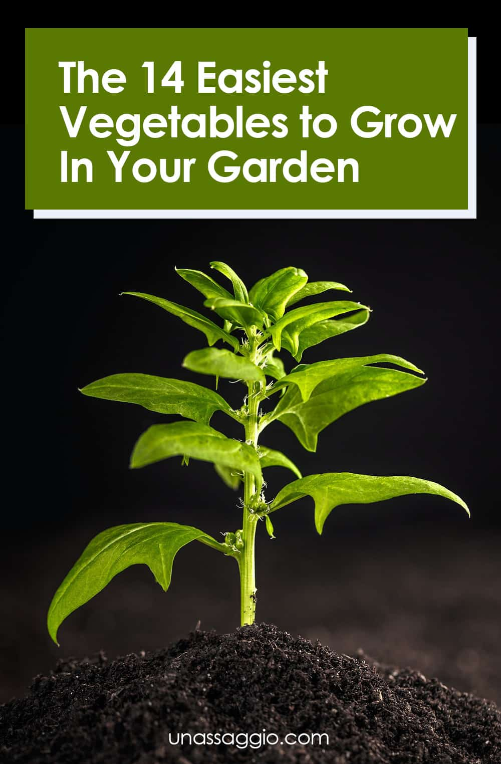 The 14 Easiest Vegetables to Grow In Your Garden