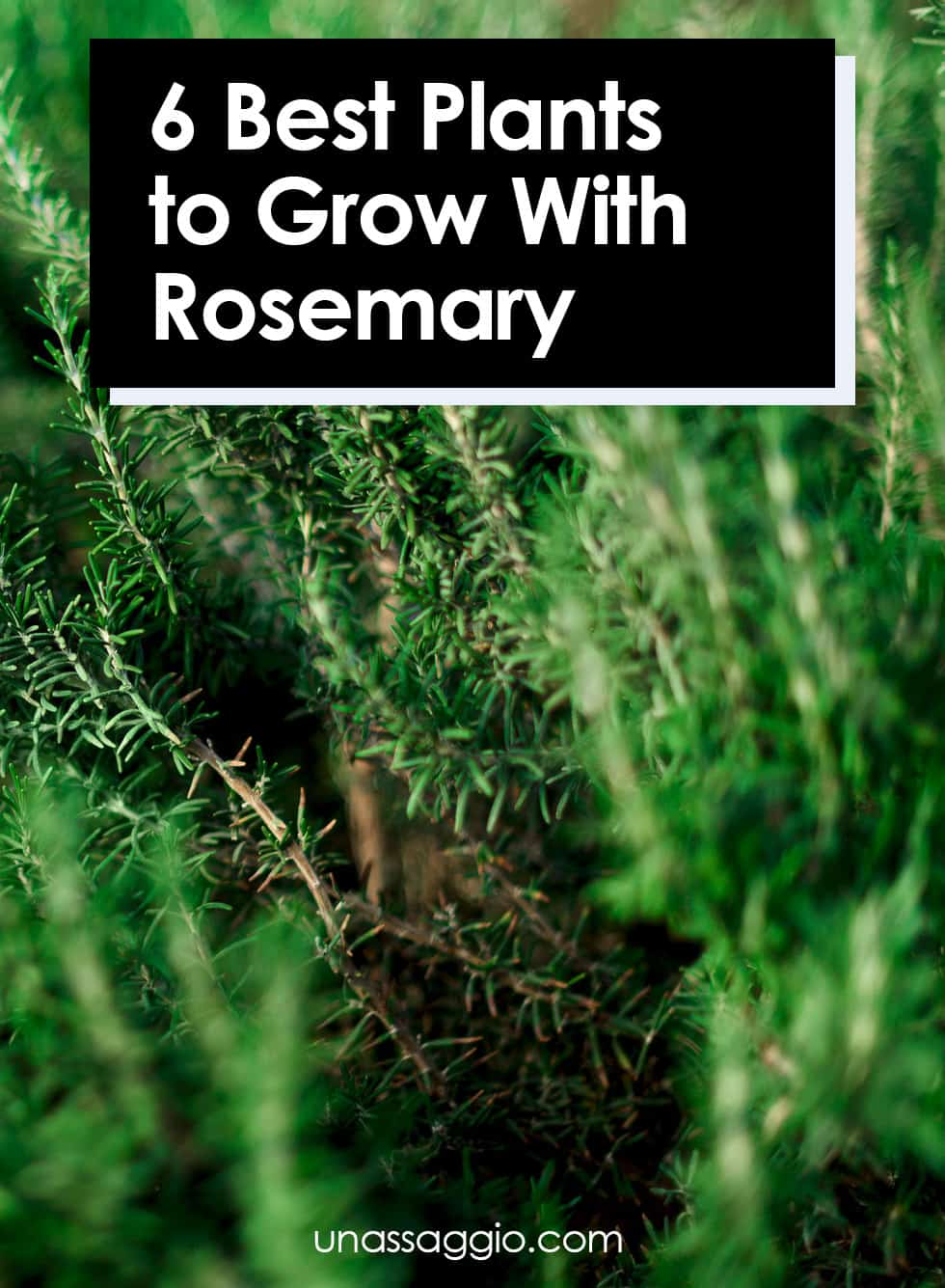 6 Best Plants to Grow With Rosemary