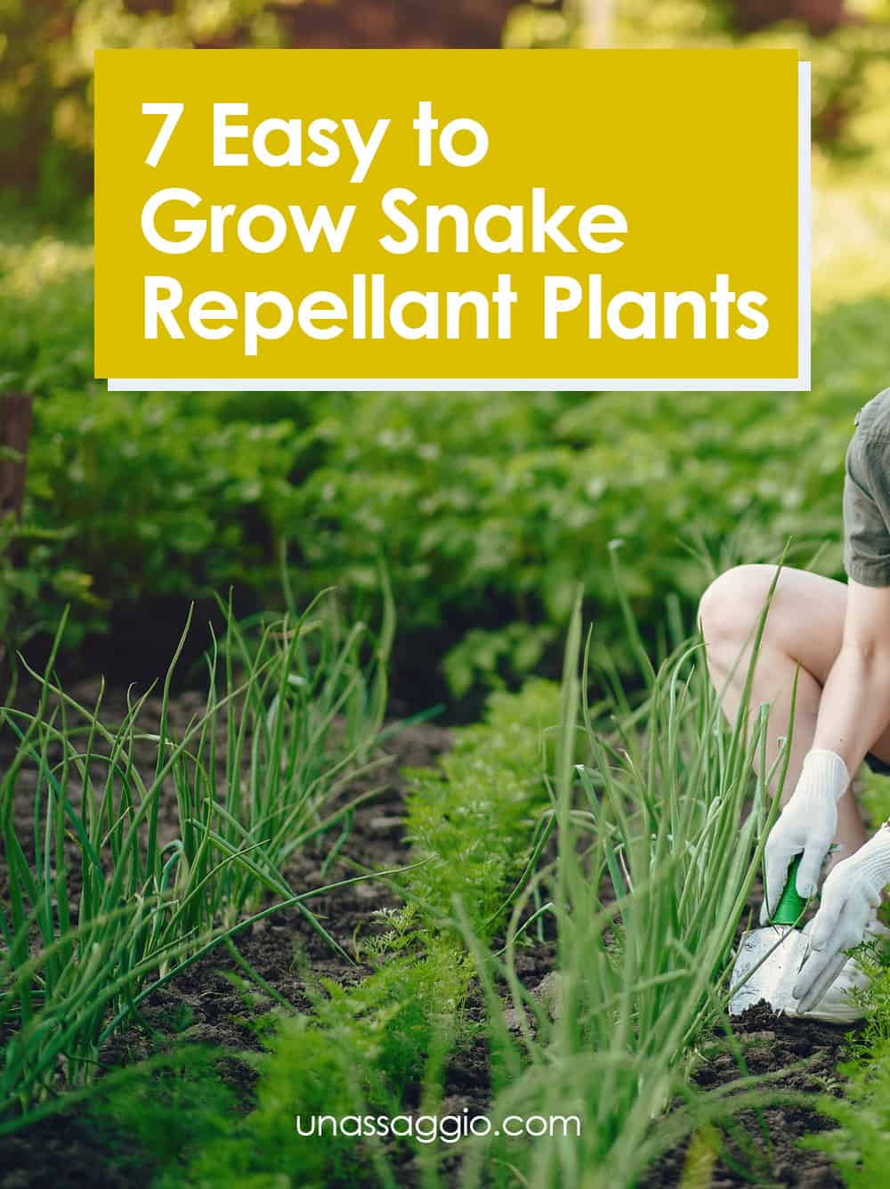 Snake Repellant Plants
