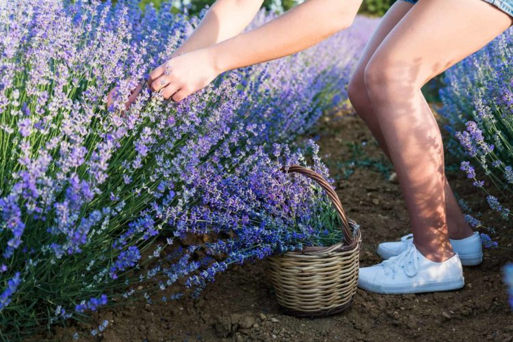 10 Best Insects And Bug Repellant Plants For Your Garden