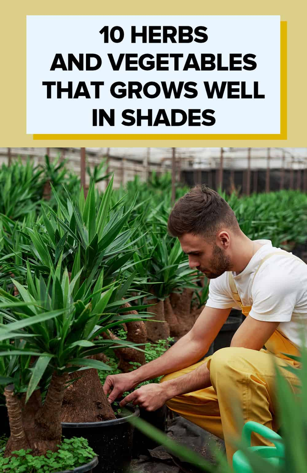10 Herbs  And Vegetables  That Grows Well  In Shades