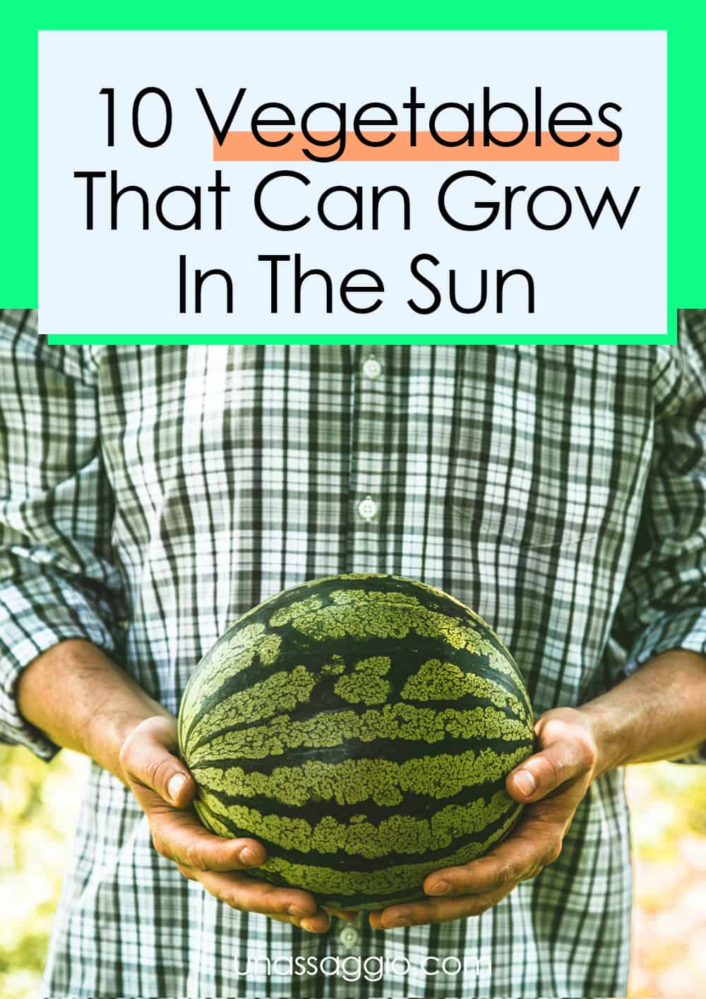 10 Vegetables That Can Grow In The Sun