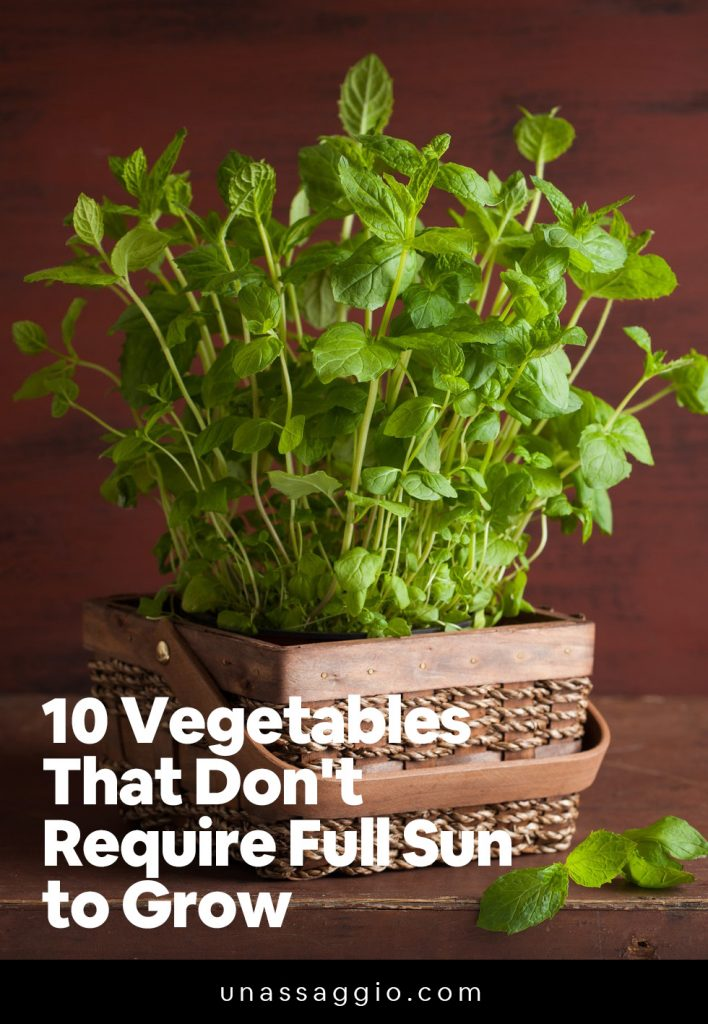 10 Vegetables That Don't Require Full Sun to Grow