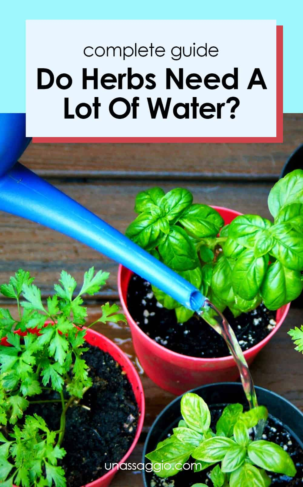 Do Herbs Need A Lot Of Water?
