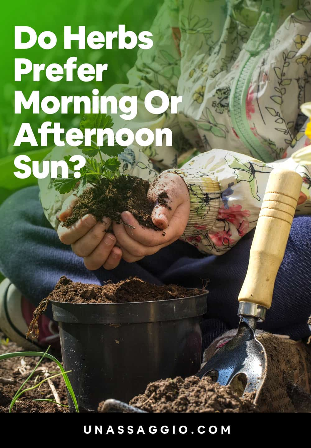 Do Herbs Prefer Morning Or Afternoon Sun?