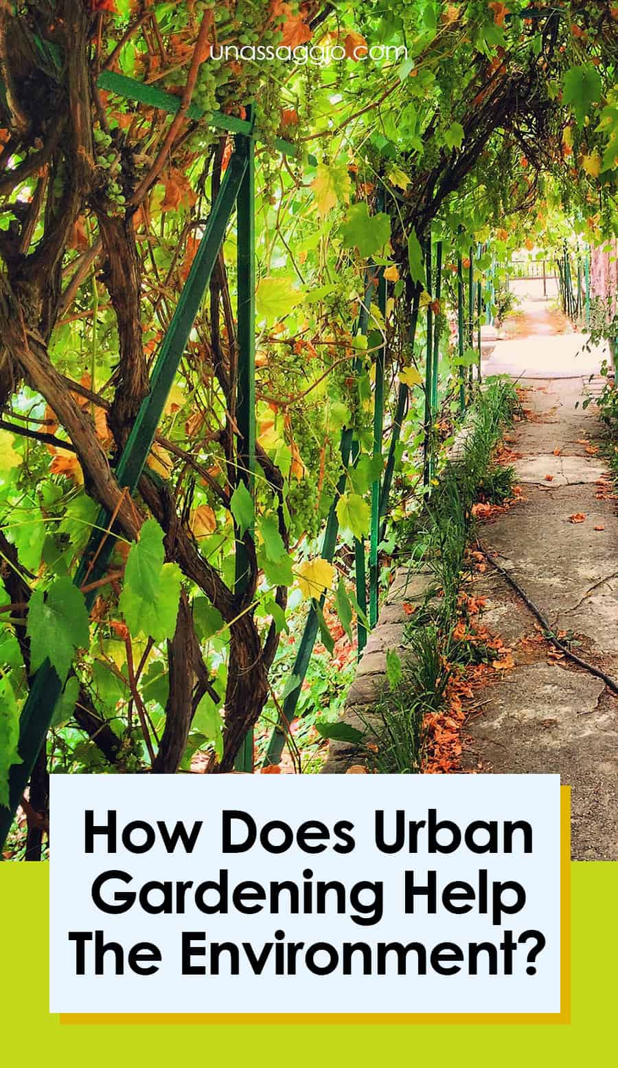 How Does Urban Gardening Help The Environment?