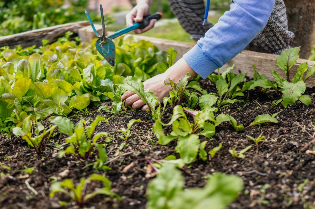 Can You Fill A Raised Bed With Compost?
