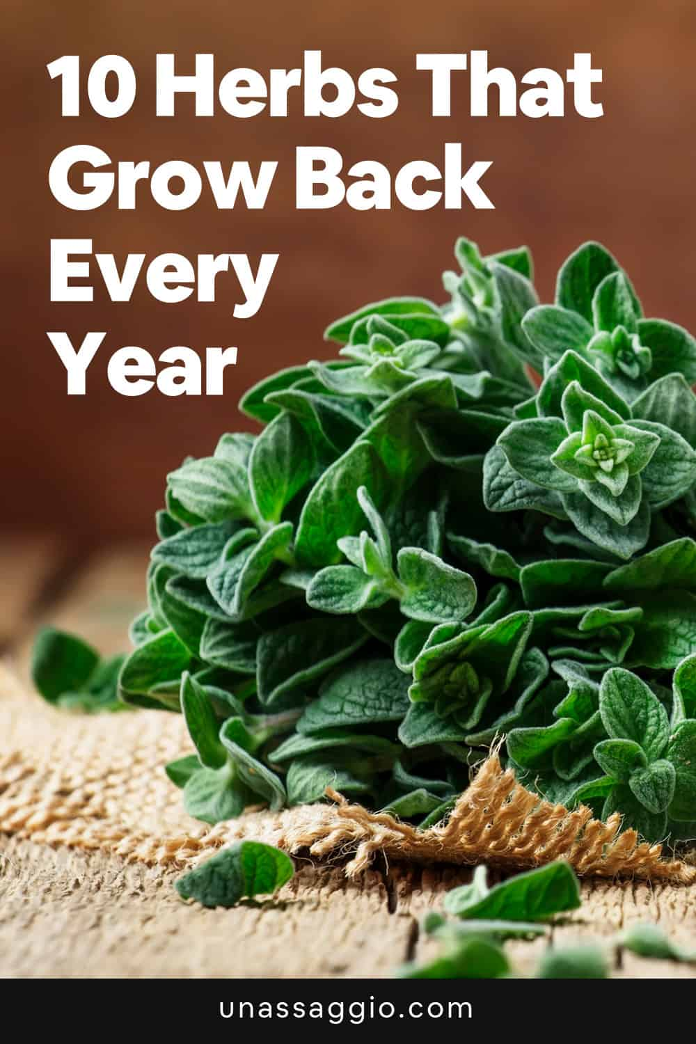 10 Herbs That Grow Back Every Year