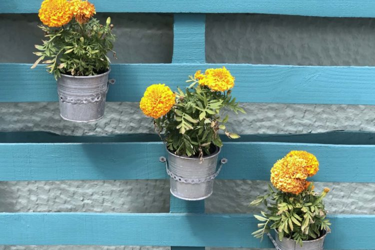 How To Make A Pallet Garden (Complete Guide)