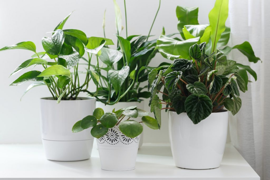 8 Plants That Can Be Grown In Plastic Bottles