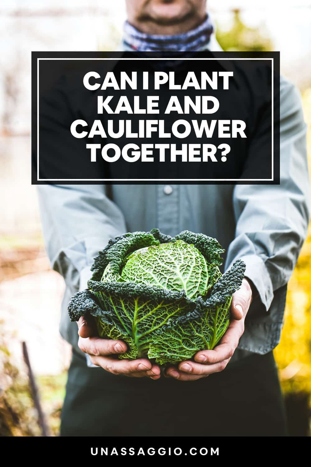 Can kale and cauliflower be planted together?