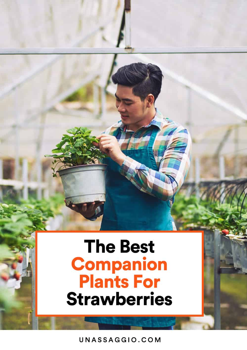 The Best companion plants for strawberries