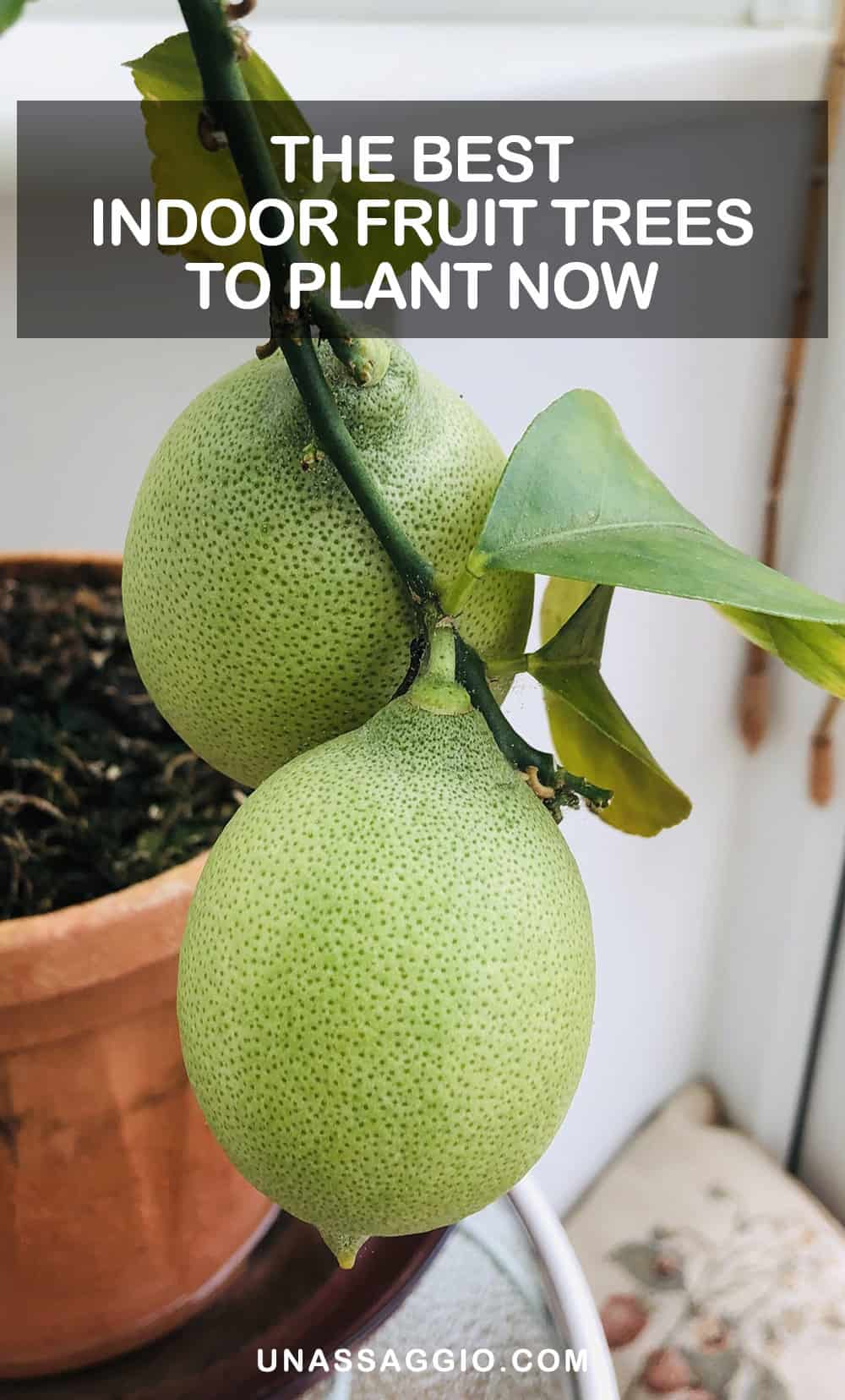 The Best Indoor Fruit Trees to Plant Now