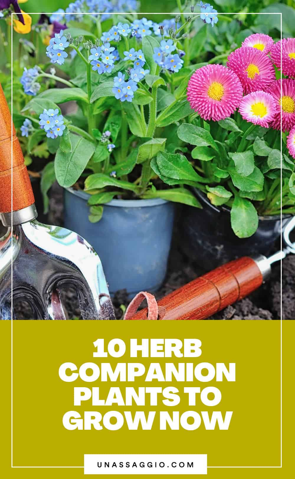 10 Flowers To Plant With Herbs For More Benefits