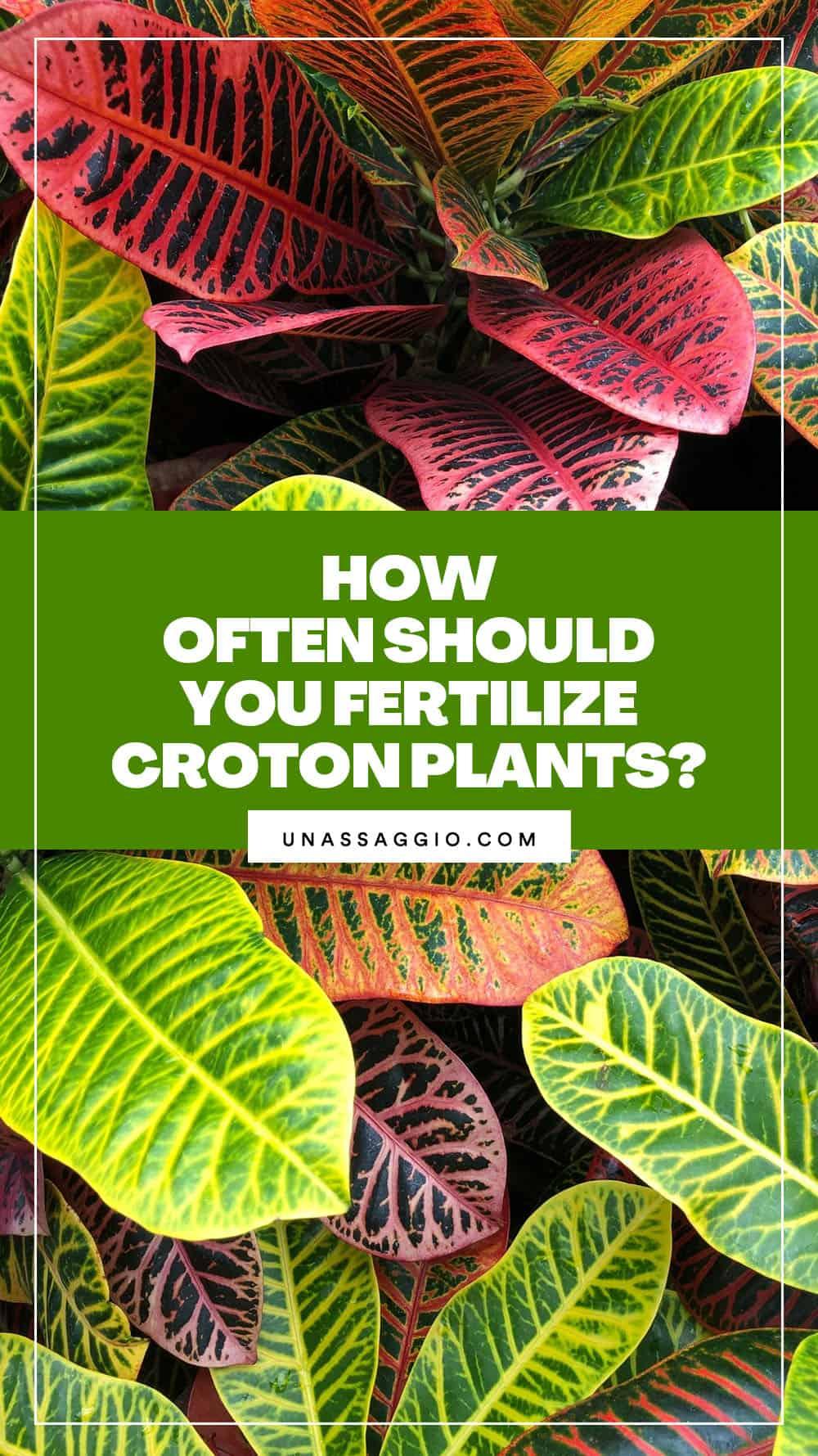 How Often Should You Fertilize Your Croton Plants?