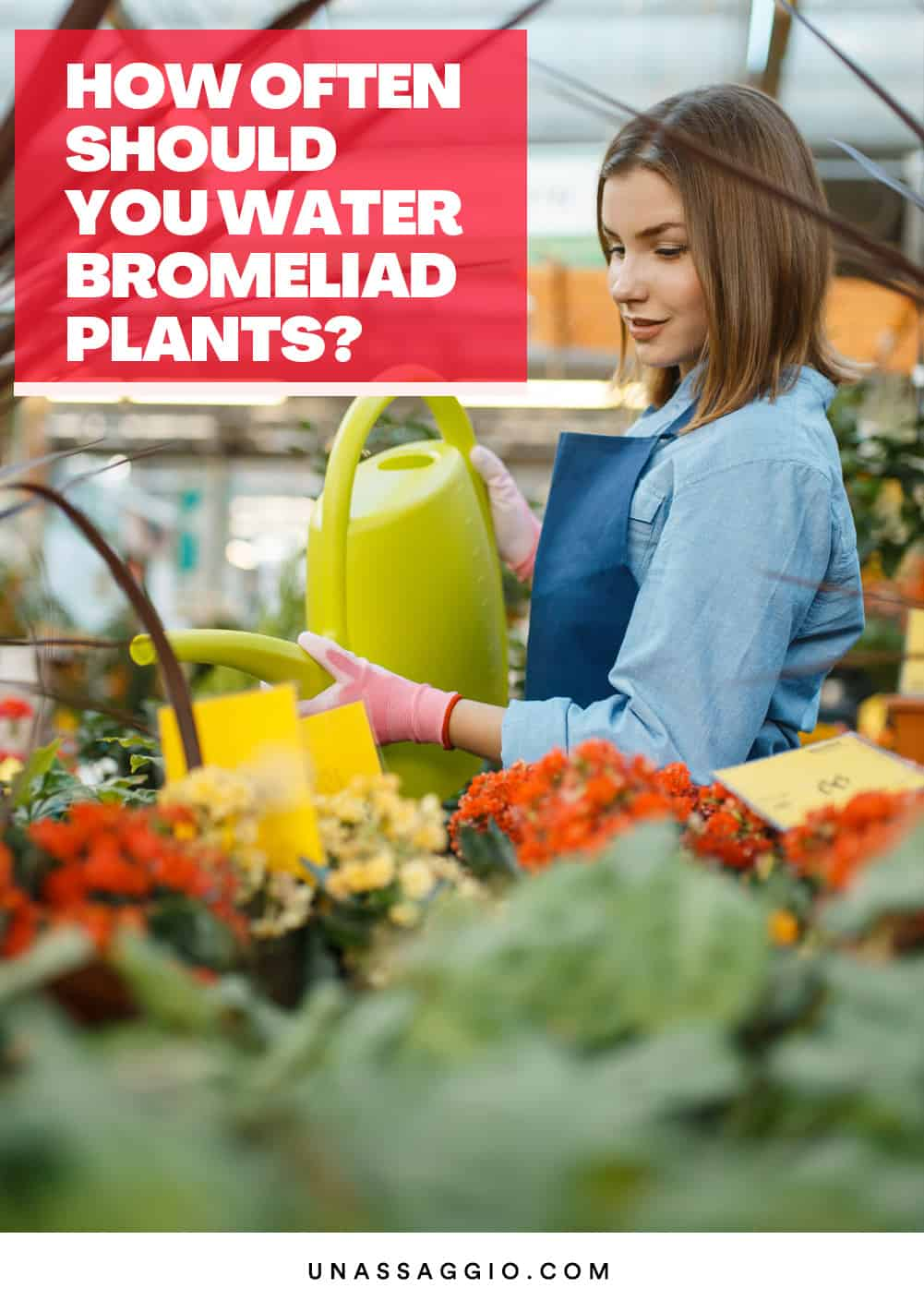 How Often Should You Water Bromeliad Plants?
