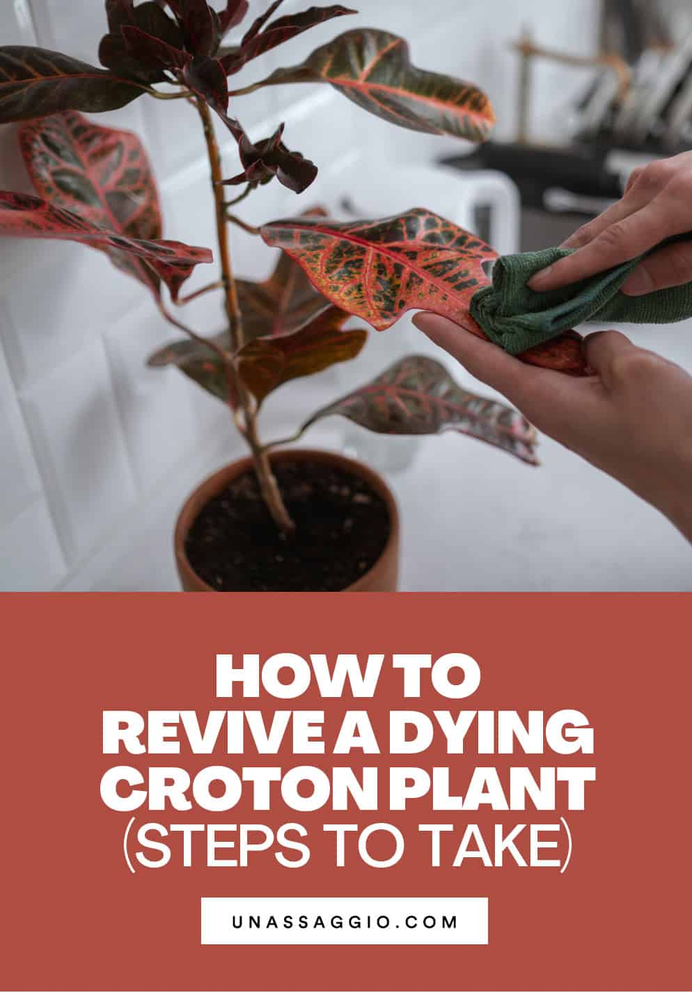 How to Revive A Dying Croton Plant
