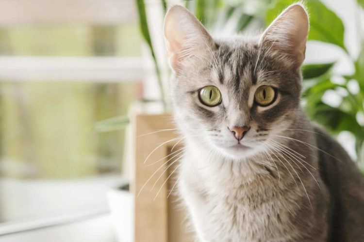 Are Bromeliads Poisonous to Cats and, or Dogs?