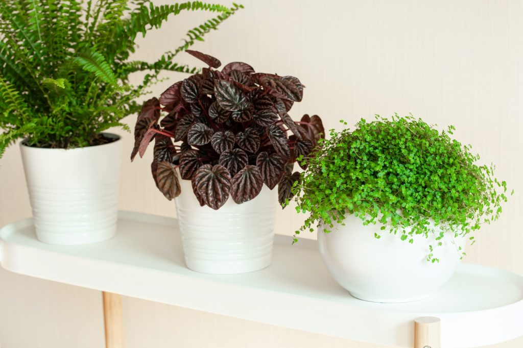 Most Colorful Indoor Plants