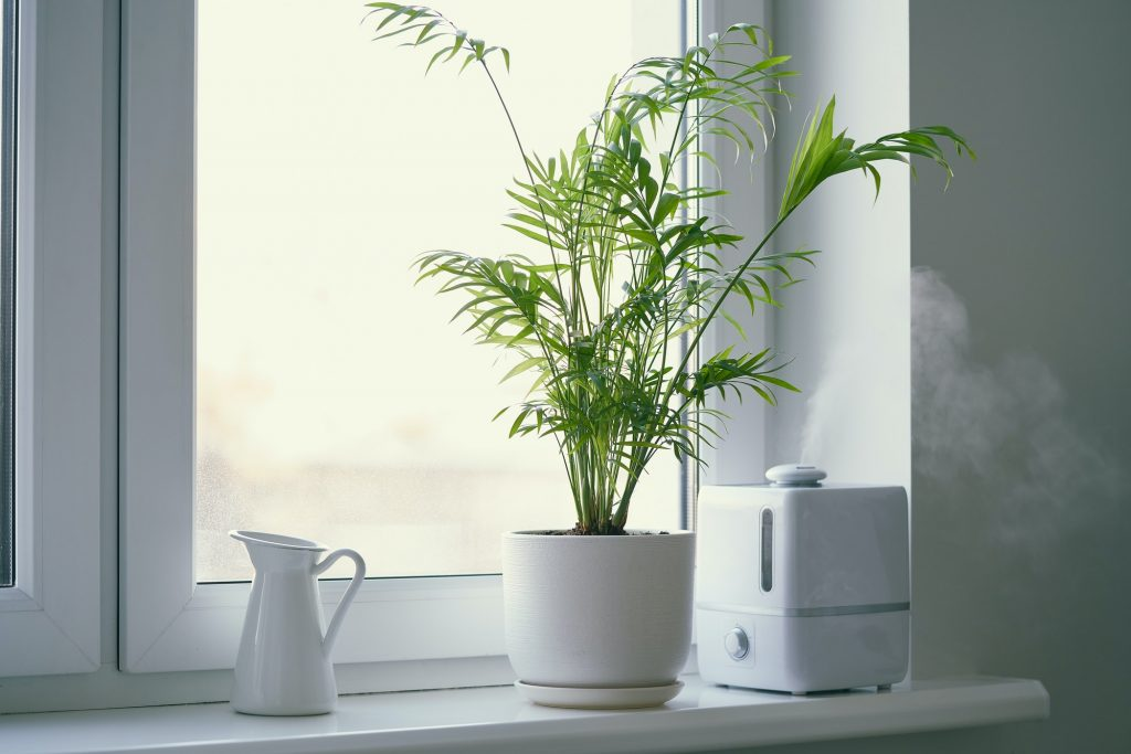 Humidifier and flower Chamaedorea in a pot on the window.
