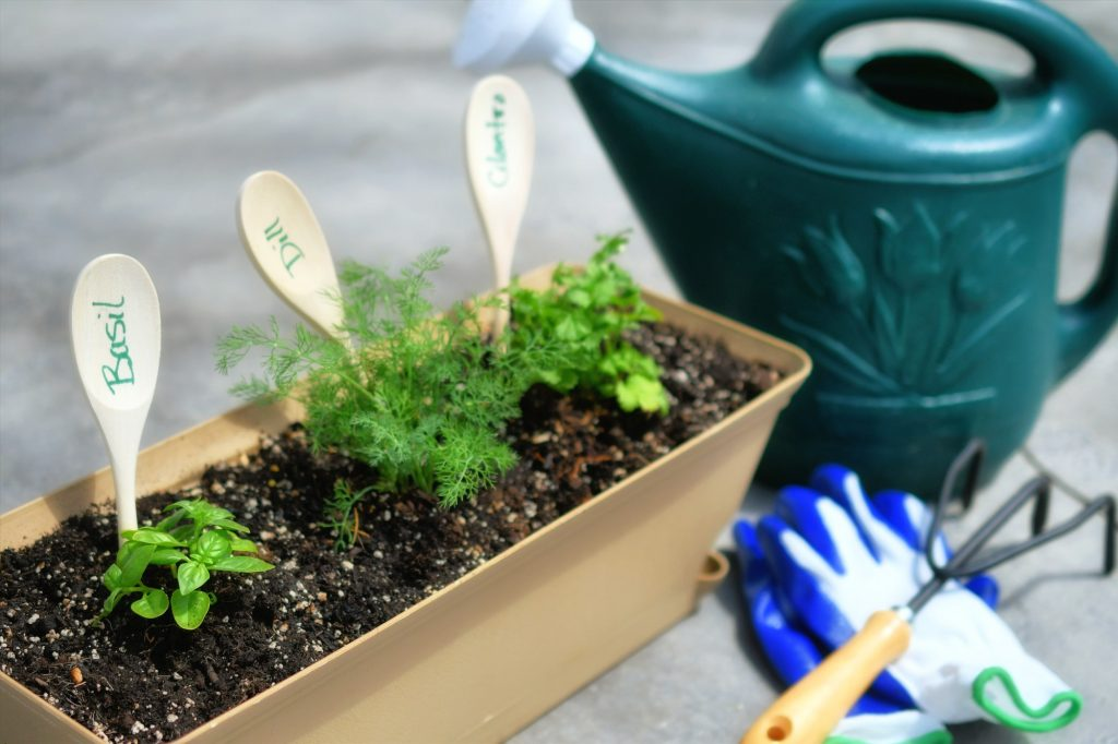 Perennial Herbs That Grow Back Every Year