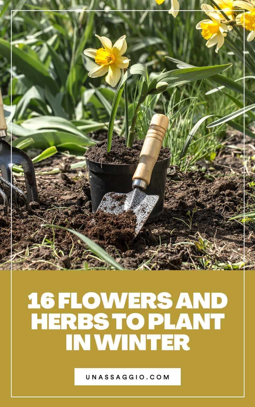 16 Flowers and Herbs to Plant in Winter