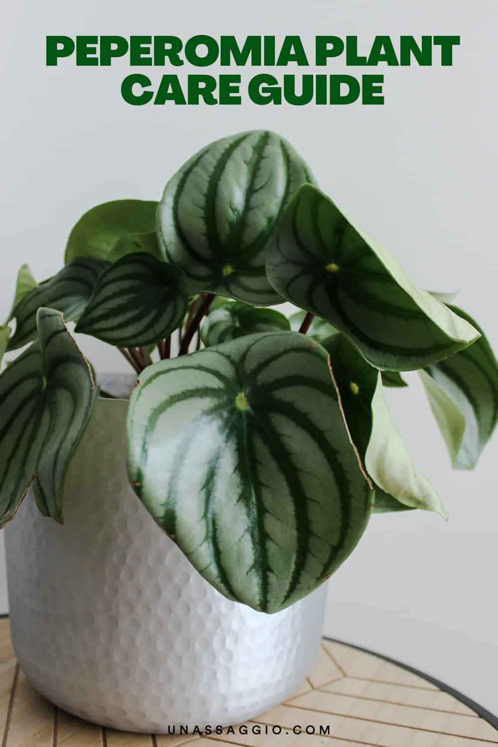 Peperomia Plant Care Guide