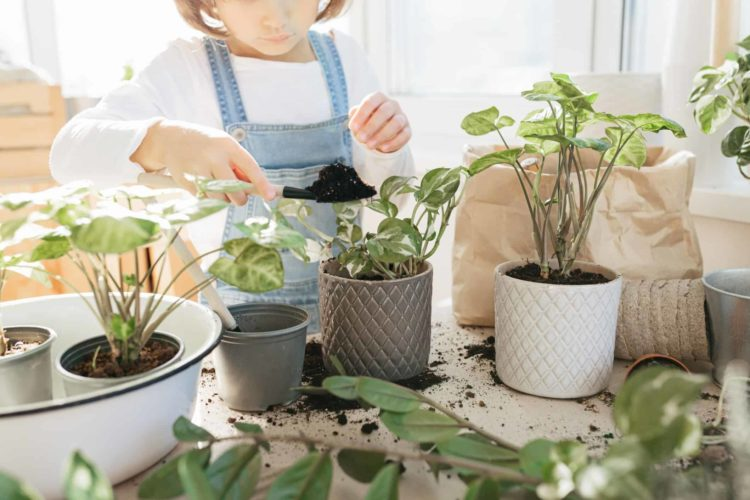Differences Between Pothos and Philodendrons