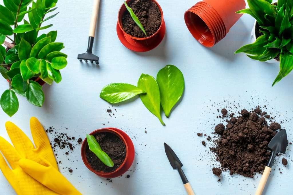 How to Revive Dying Houseplants