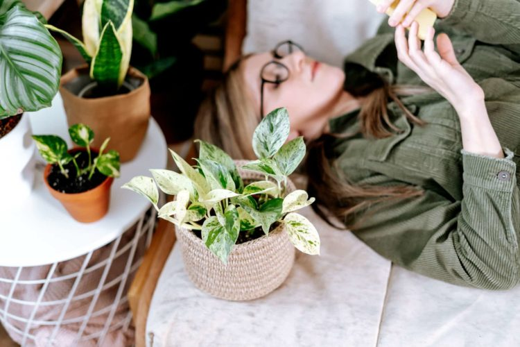 Best Planters For Indoor Plants And Herbs