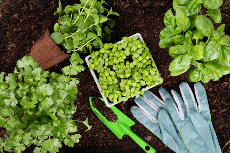 edible perennial vegetables that grow back every year