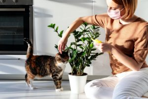 """Safe For Cats"""" Houseplants"""