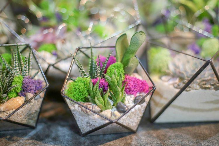 Pebble Trays For Houseplants